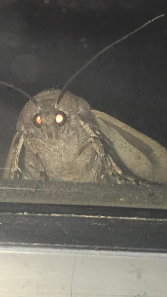 original moth memes