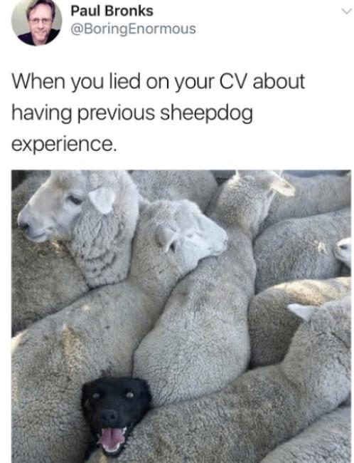 doggo memes, dank doggo memes, funny doggo memes