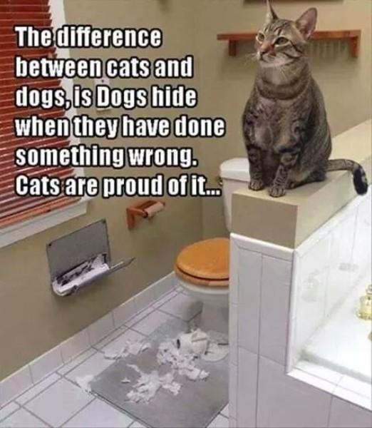 cat meme, funny cat memes, cute cat meme