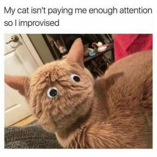 cat meme, funny cat memes, cute cat meme