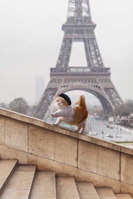 DrunkenGringo, This cat in Paris photoshop battel funny, reddit photoshop battel
