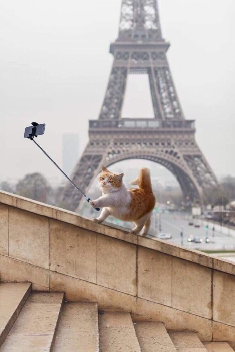 Freddykruugs, This cat in Paris photoshop battel funny, reddit photoshop battel