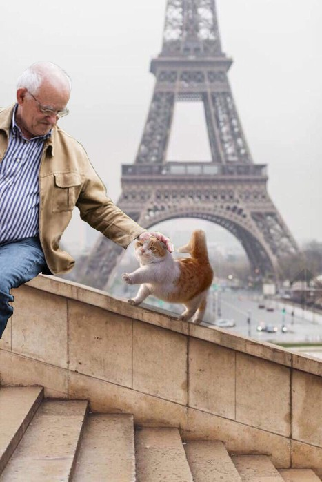 ShadoBlast, This cat in Paris photoshop battel funny, reddit photoshop battel