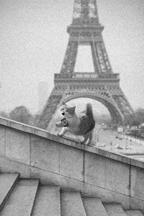 ZeeRoweArrow, This cat in Paris photoshop battel funny, reddit photoshop battel