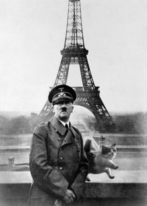 alium, This cat in Paris photoshop battel funny, reddit photoshop battel