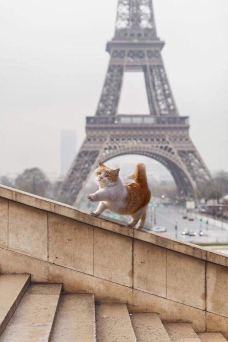 machine_drum, This cat in Paris photoshop battel funny, reddit photoshop battel