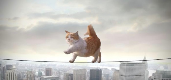 trulyrandom5358, This cat in Paris photoshop battel funny, reddit photoshop battel