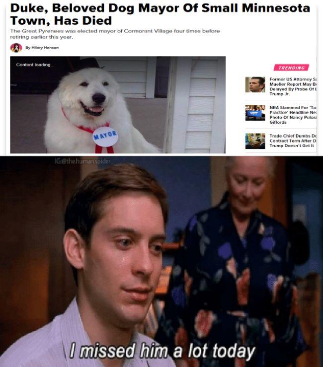 28 Funniest PETA Memes...